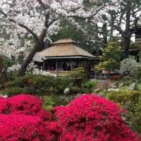 Lunch at The Butler and The Chef + The Japanese Tea Gardens
