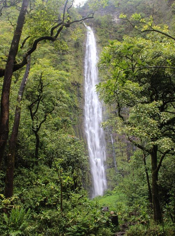 Pipiwai-Trail-----_thumb1_thumb